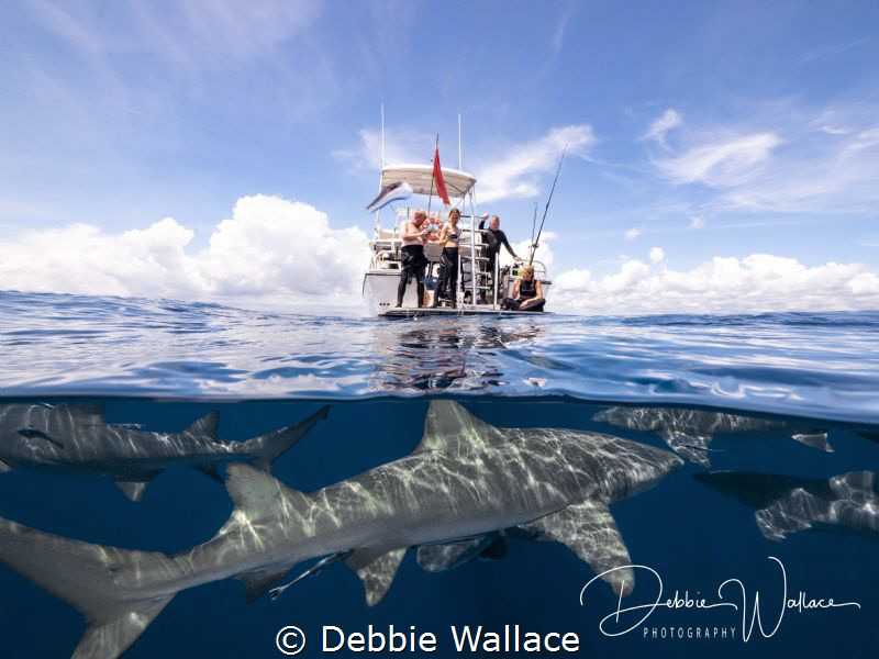 Diving off the coast of Jupiter, FL we were diving with a... by Debbie Wallace