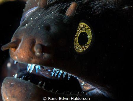 Moray eel - Charming smile by Rune Edvin Haldorsen