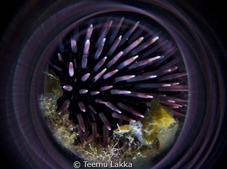 Purple circle by Teemu Lakka
