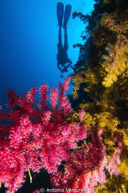 photo taken at La Montagna dive site, Scilla , Italy by Antonio Venturelli