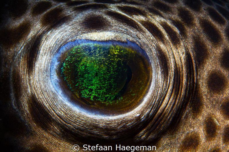 Eye of the pufferfish in Secret bay by Stefaan Haegeman