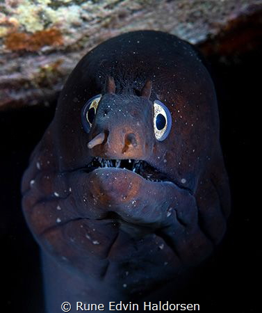 Moray eel by Rune Edvin Haldorsen