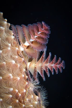 Just another Christmas Tree Worm but I really like the li... by Lowrey Holthaus