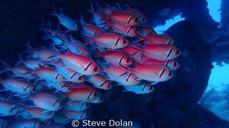 """School of squirrels"" Taken under a wreck in Barbados wit... by Steve Dolan"