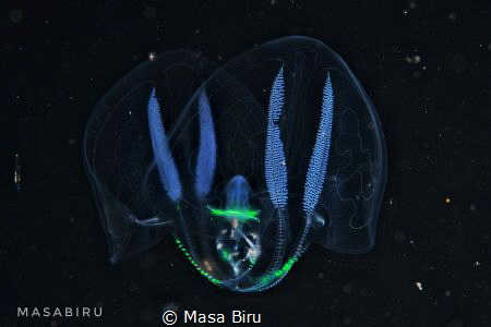 jelly fish by Masa Biru
