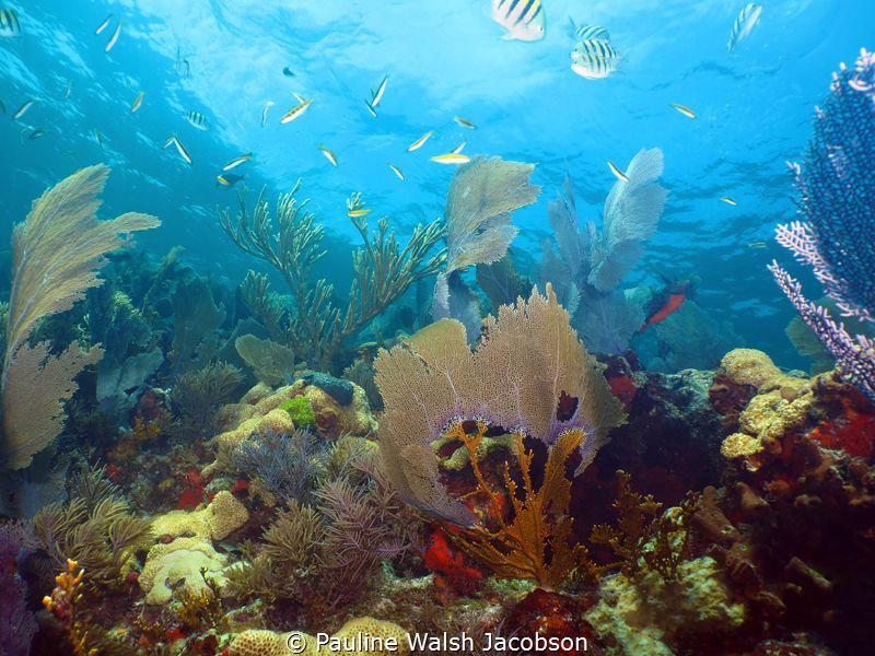 Coral Reef Scene, Elbow Reef, John Pennekamp Coral Reef S... by Pauline Walsh Jacobson