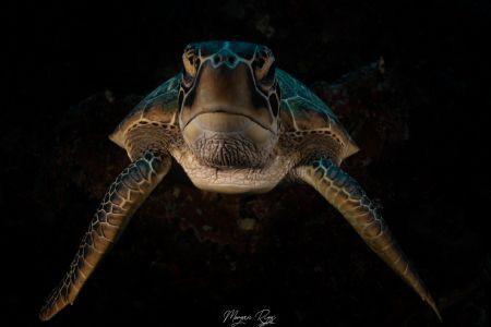 Shadow Turtle by Morgan Riggs
