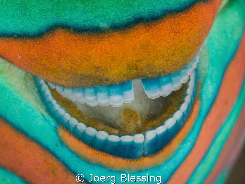 Smile of a parrotfish. by Joerg Blessing