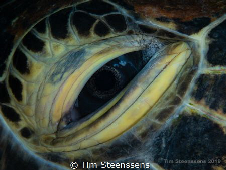 The eye of the beholder... by Tim Steenssens