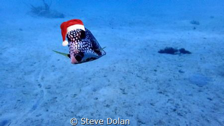 Merry Christmas Underwater Photographers by Steve Dolan