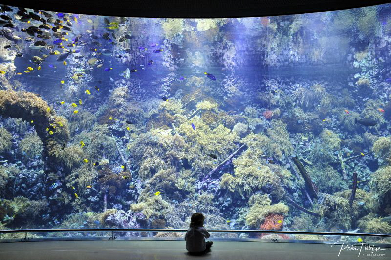 daughter enjoys the Antwerp zoo aquarium by Pieter Firlefyn