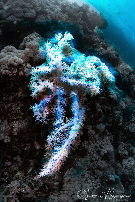 White Coral on Wall/Photographed with a Tokina 10-17 mm f... by Laurie Slawson
