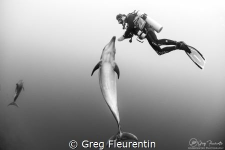 Amazing encounter by Greg Fleurentin