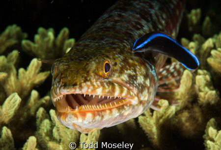 Lizard Fish Smiling. (Slightly Cropped). by Todd Moseley