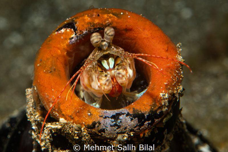 Mantis in the bottle. by Mehmet Salih Bilal