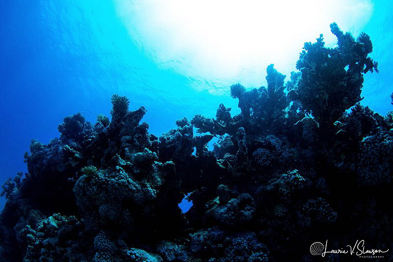 Reefscape/Photographed with a Tokina 10-17 mm fisheye len... by Laurie Slawson