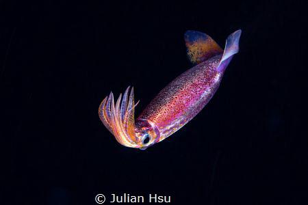 Blackwater squid by Julian Hsu