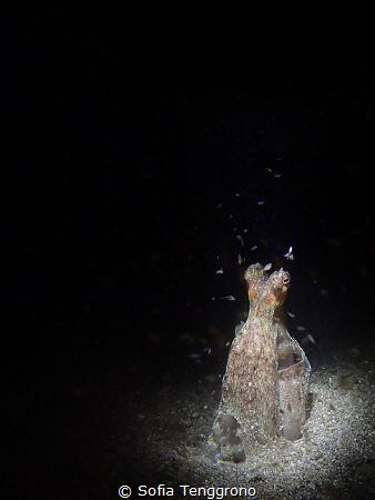 """""""I find you Squiddly"""" - Coconut octopus with tiny squid f... by Sofia Tenggrono"""