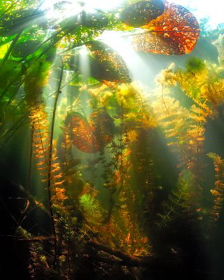 Underwater fall. by Sergey Lisitsyn