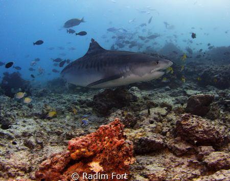 Krásné odpoledne pod vodou. by Radim Fort