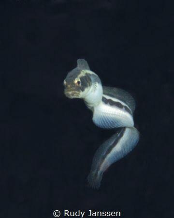 black water dive by Rudy Janssen