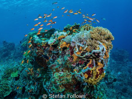"""No water, no life. No blue, no green."" – Sylvia Earle