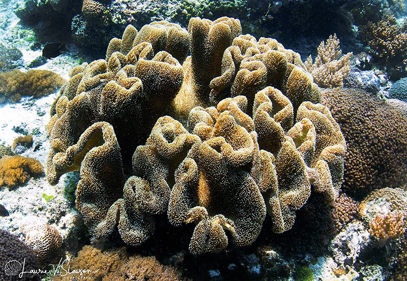 Coral Formation/Photographed with a Tokina 10-17 mm fishe... by Laurie Slawson