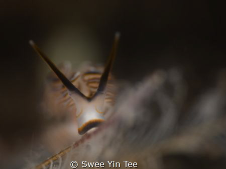 """Sleepy face of nudibranch named dotto or """"donut"""". The sho... by Swee Yin Tee"""