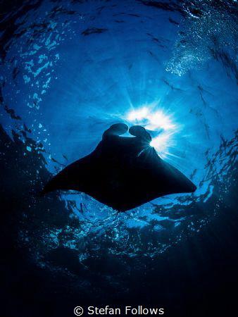 Bubbalicious  Manta Ray - Mobula alfredi  Manta Point... by Stefan Follows
