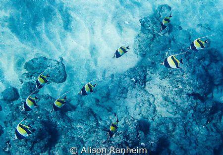 Black Rock, Maui by Alison Ranheim