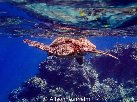 Ahihi-kina'u natural area reserve, Maui by Alison Ranheim