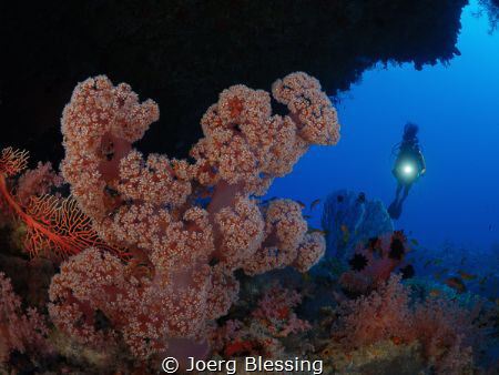 soft coral by Joerg Blessing