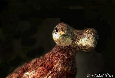Octopus eyes by Michal Štros