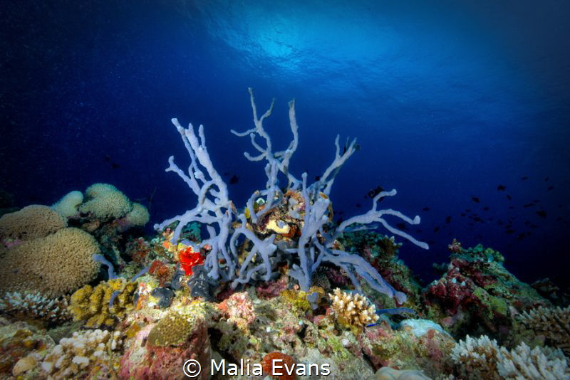 Coral and Color... by Malia Evans