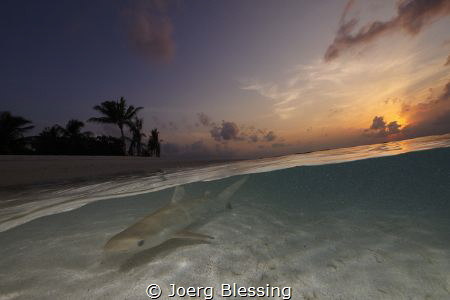 Baby blacktop in the shallow by Joerg Blessing