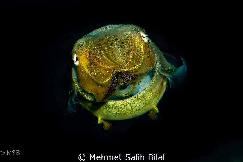 Cuttlefish. by Mehmet Salih Bilal