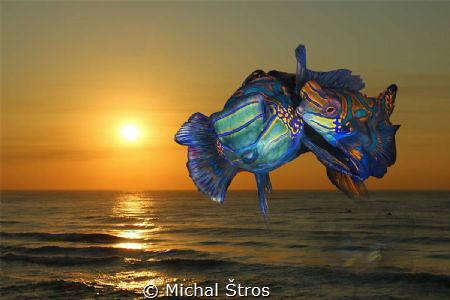 Time for love (Mandarin fish mate every day at sunset) by Michal Štros