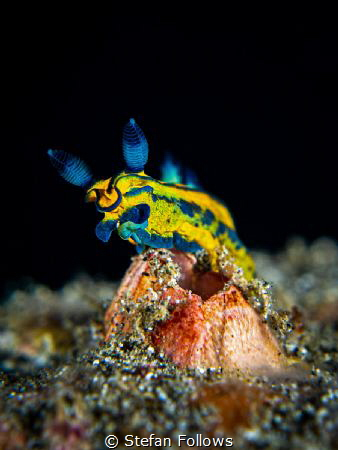 Aerials
