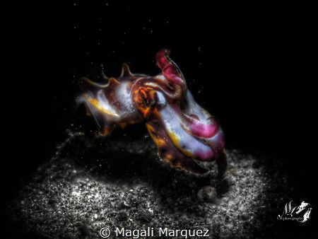Black white and color 