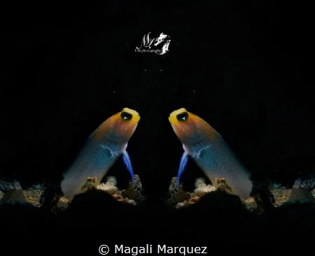 Mirror mirror on the wall, who is the most beautiful  jaw... by Magali Marquez