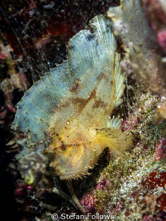 Same same ...
