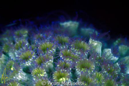 Fun with fluorescence. by Arun Madisetti