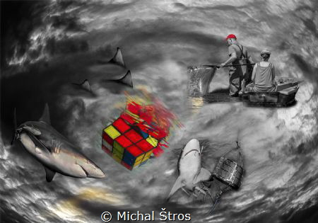 Stop killing sharks by Michal Štros