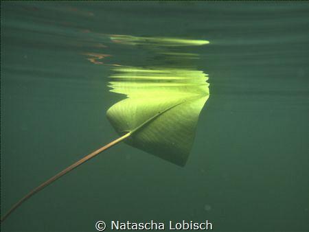 leaf Heider Bergsee by Natascha Lobisch
