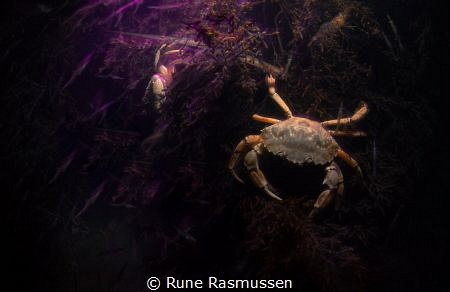 Crab Waiting for a shrimpy meal! slow shutter photo with ... by Rune Rasmussen