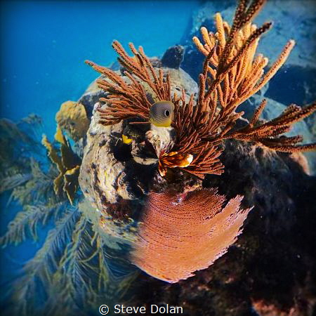 """Looking down"" taken at Coki beach St. Thomas USVI with O... by Steve Dolan"