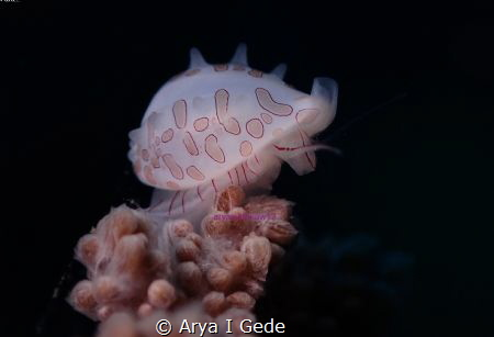 small and cute by Arya I Gede