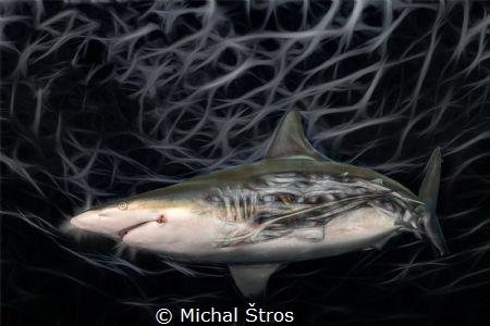 Shark anatomy by Michal Štros