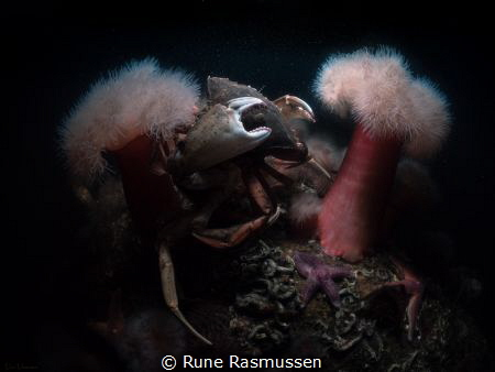 crabs having fun. by Rune Rasmussen
