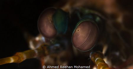 Windows into the soul. by Ahmed Reehan Mohamed